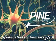 NEC_PRI_Logo_Stylized